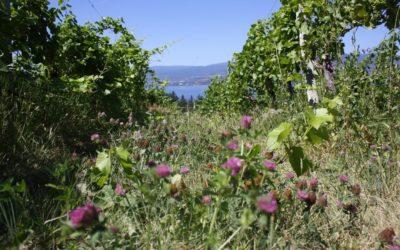 Summerhill Pyramid Winery (British Columbia)